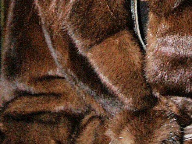 Norek se původně choval kvůli kožešine