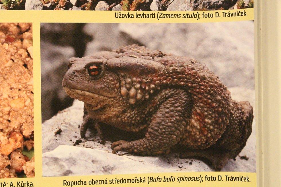První letošní výstava, která je instalována v Městské galerii a muzeu ve Vodňanech, patří společnosti muzejních zoologů Zoogeos Bohemia.
