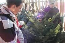 Nákup vánočních stromků