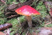 Podzimní houbařská nadílka.