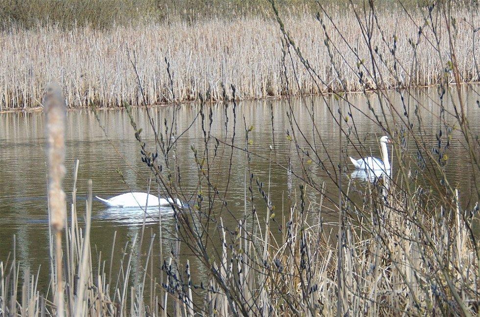 Procházka kolem rybníků.