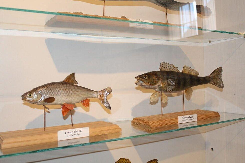 Rybářské dny Vodňany.