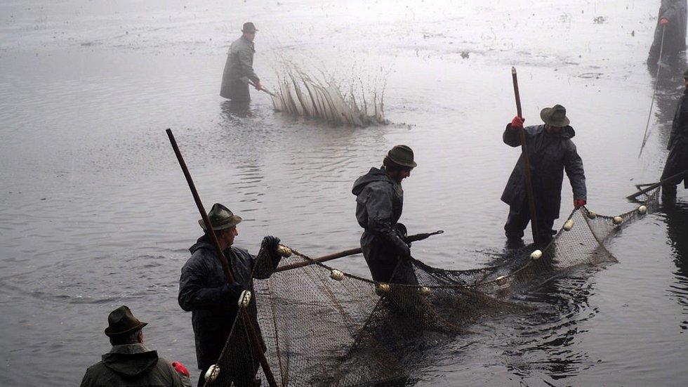Cena ryb na Vánoce bude jasná až po výlovech.