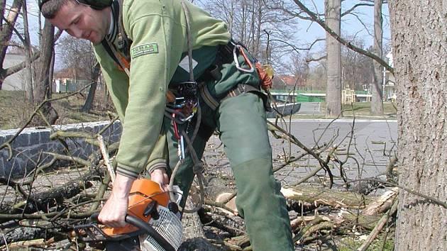 Na vykácení letitých dubů v Blatné nastoupili horolezci