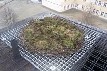 Žáci ze Základní školy v Cehnicích už vědí, jak správně připravit hnízdo pro čápa.
