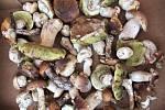 Přehlídku hub, které teď v lesích můžeme najít, zaslal do redakce Jan Malířský.
