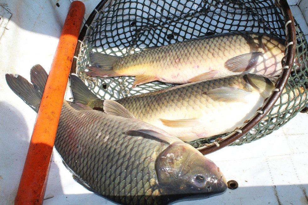 Vodňanské rybářské dny připravují tradičně program pro všechny skupiny návštěvníků.