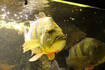 Nevíte co podniknout? Co takhle prohlídka rybářského muzea a akvárií Střední rybářské školy Vodňany.