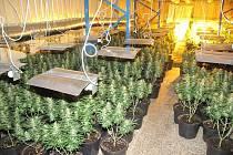 Policisté našli v hale ve Vodňanech téměř dva tisíce rostlin marihuany.