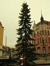 Poslední chvíle vánočního stromu na Velkém náměstí