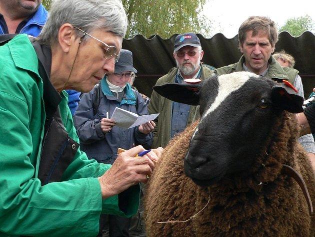 Aukce beránků se v sobotu uskutečnila v chovatelském areálu na Podsrpu ve Strakonicích.