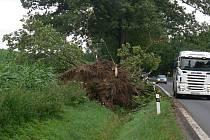 Nedaleko Cehnic středeční vichřice vyvrátila strom hned u hlavní silnice.