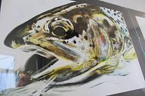 Ryby doslova jako živé dokážou nakreslit mladé výtvarnice Radka Bošková a Aneta Farová. Jejich výstava Ryby v obrazech se otevírá ve Vodňanech ve Sloupové síni radnice.