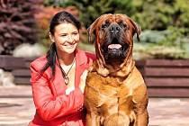 Chovatelka Gabriela Pavlíčková se psem tosa inu