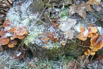 Novoroční houbařský úlovek.
