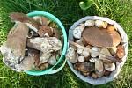 Úlovky hub. Je to krása.