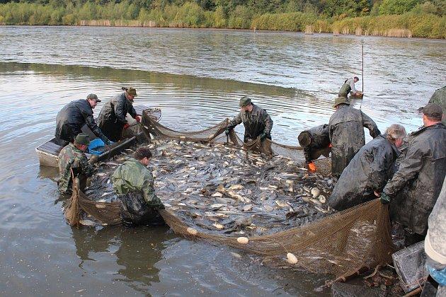 Strakonicko - Výlovy  rybníků v okrese  končí 25. listopadu . Snímek je z letošního  výlovu  Blatského rybníka ve Strakonicích
