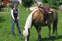 Koně.