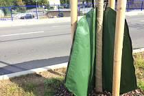 Zavlažovací vaky pro zeleň ve Strakonicích.