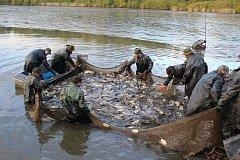 Blatský rybník ve Strakonicích se lovil v sobotu 7. října