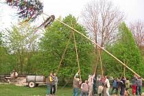 Stavění májky v roce 2009 v Nihošovicích.