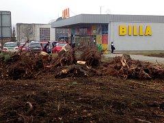 Stromy už byly zlikvidovány.
