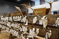 Přehlídka loveckých trofejí. Ilustrační foto