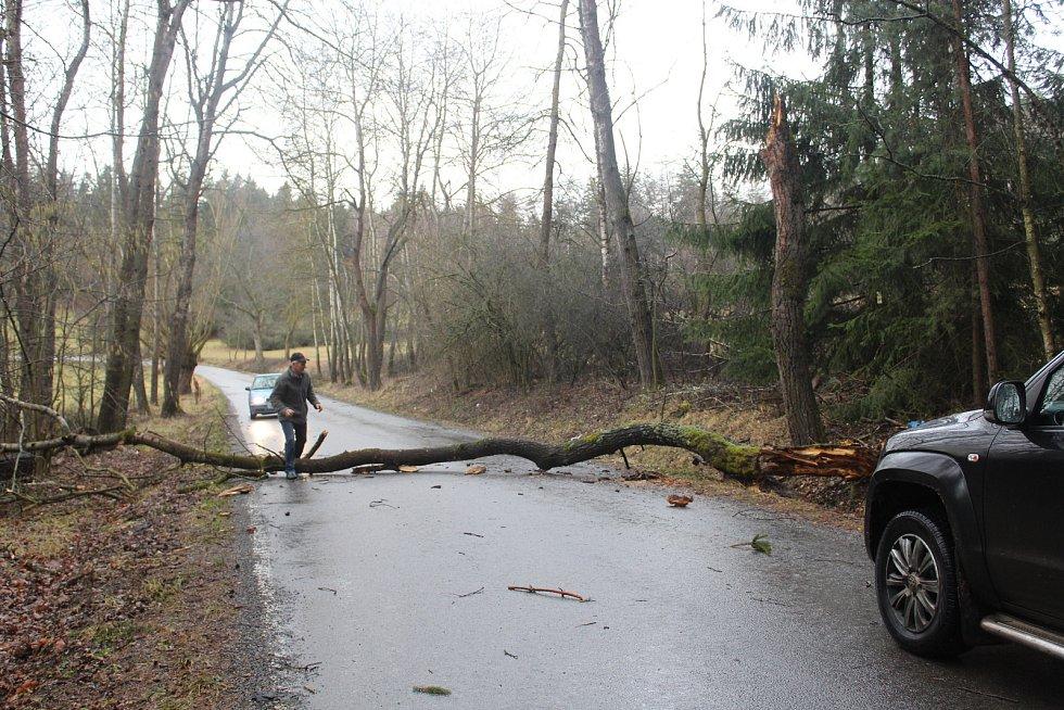 Padlé stromy u Drachkova na Strakonicku.
