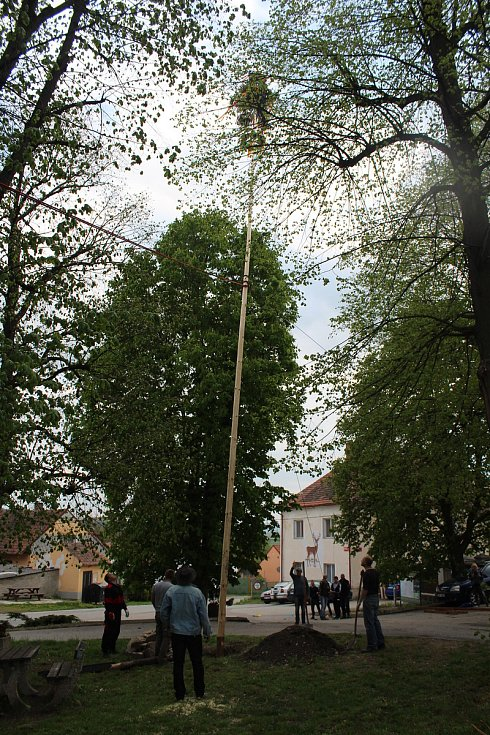 Stavění májky v Hošticích v roce 2019.