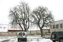 Na stromě vpravo ukončil mladík svůj život.