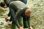 Štěkeň - U jezu se v sobotu konal první rýžování zlata.