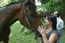 Žehnání koním.