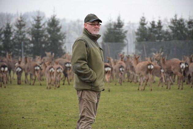 OBRAZE: V oboře u svého statku v Lidmovicích chová Václav Šoul největší stádo jelenů sika Dybowského.