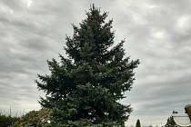 Strom pro Velké náměstí.