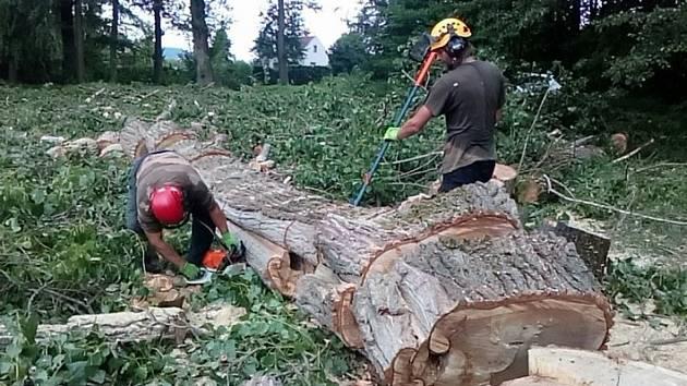 Stromy musely k zemi.