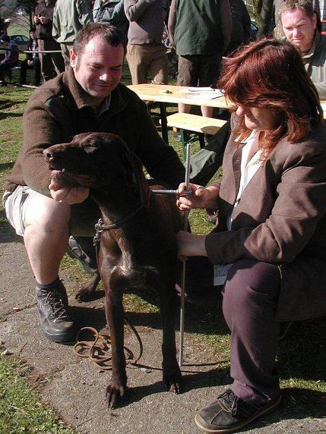Lovecký pes musí splňovat požadovaná kritéria. Ta se zjišťují právě při svodu.