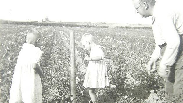 Růžové školky v Blatné měly v roce 1925 asi 14 ha