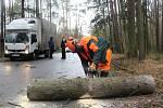 Silničáři museli rozřezat padlý smrk na silnici ze Strakonic na Drachkov.