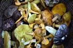 Podzimní houby.