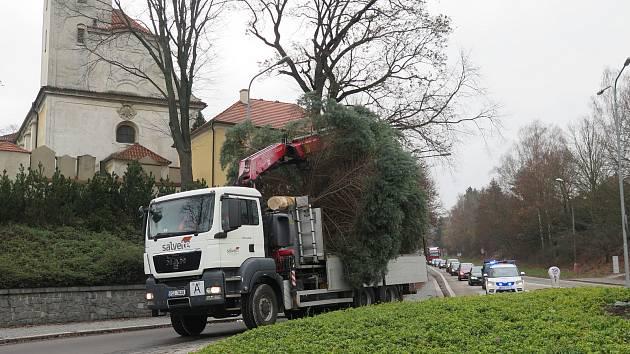Cesta vánočního stromu.