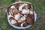 Konečně začaly růst houby.