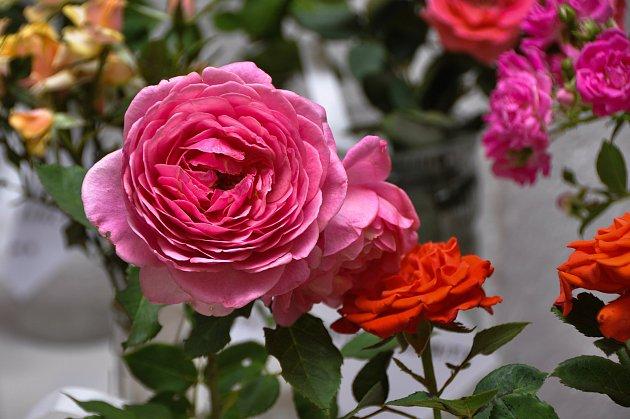 V neděli 5. srpna byla součástí tradiční pouti prodejní výstava Květy Volyně 2018 v Pošumavské tržnici a Malé galerii.