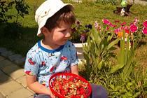 Červen je měsíc, kdy se zahrady převlékají do letní podoby.