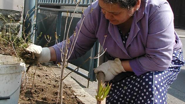 O údržbu zeleně se starají i sezonní pracovníci