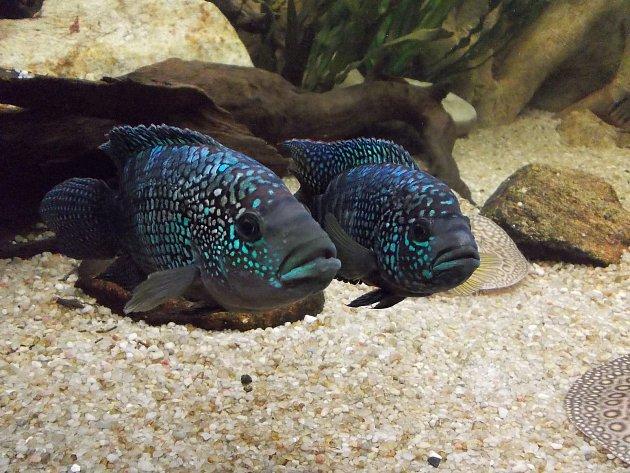 Hlavním lákadlem pro návštěvníky je 17akvárií se stovkou druhů ryb zrůzných geografických oblastí.