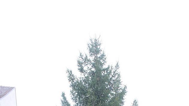 Vánoční strom na Velkém náměstí ve Strakonicích.