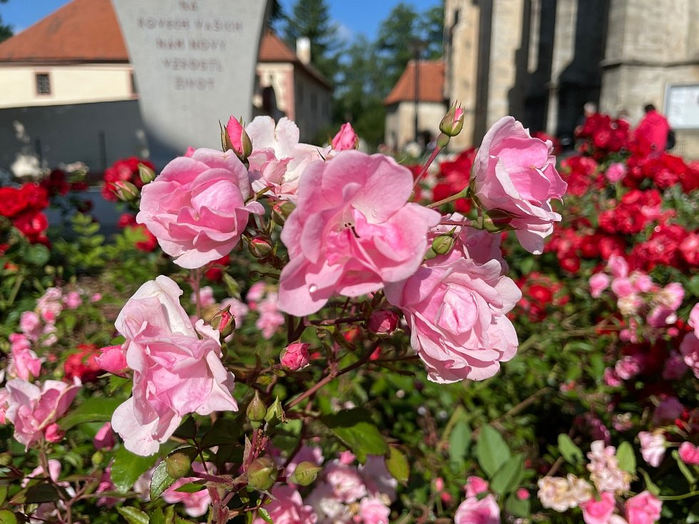 Výstavu růží v Blatné navštívily v sobotu stovky lidí.
