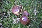 Rostou podzimní houby.