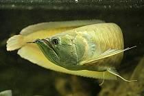 Na rybářské škole si můžete prohlédnout i obrovská akvária s netradičními druhy ryb.