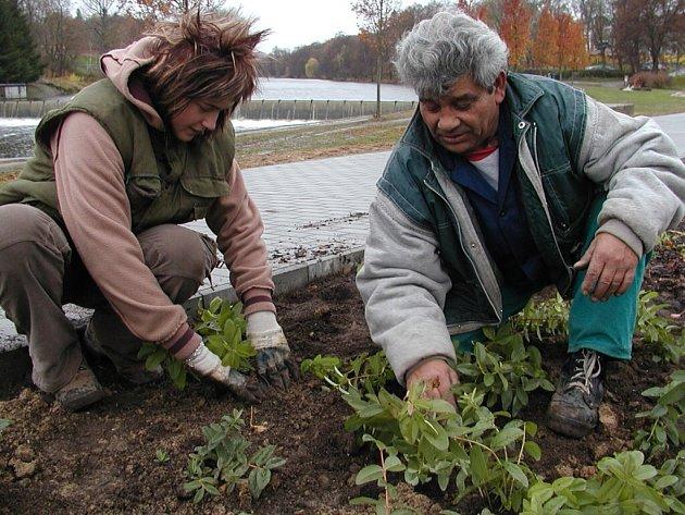 Zahradníci technických služeb dosazovali násep protipovodňového valu
